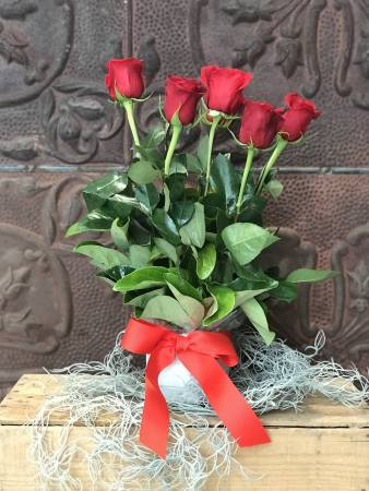 Adore 1/2 Doz Red Rose Arrangement