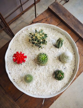Crazy about Cacti`s