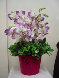 flourishing orchids